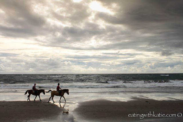 horses on bali beach